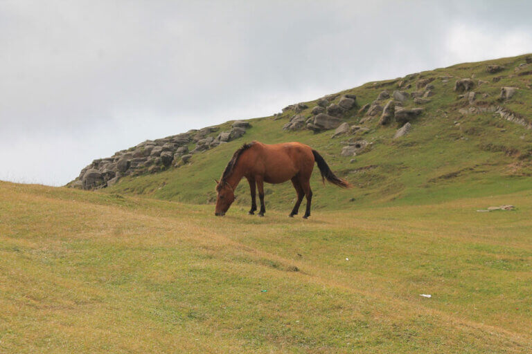 grade horse is grazing on the hills