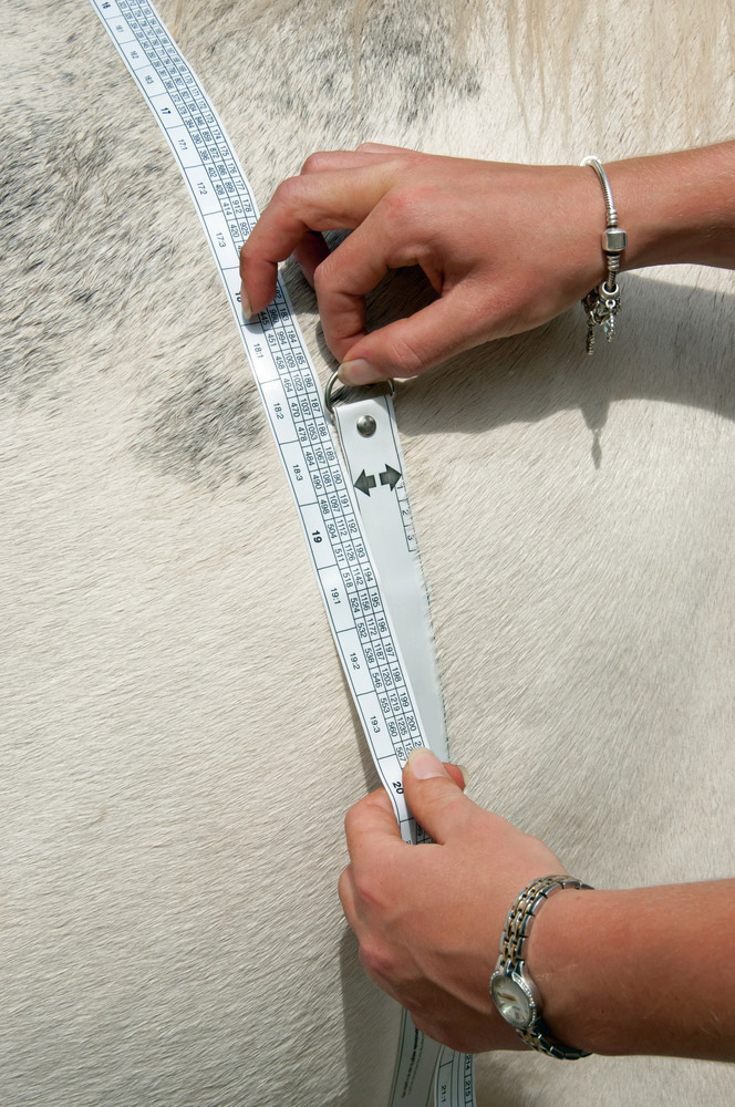 height and weight measuring tape