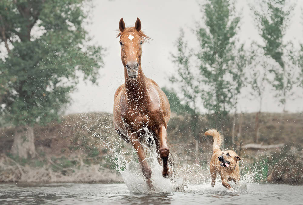 horse and dog are having fun together