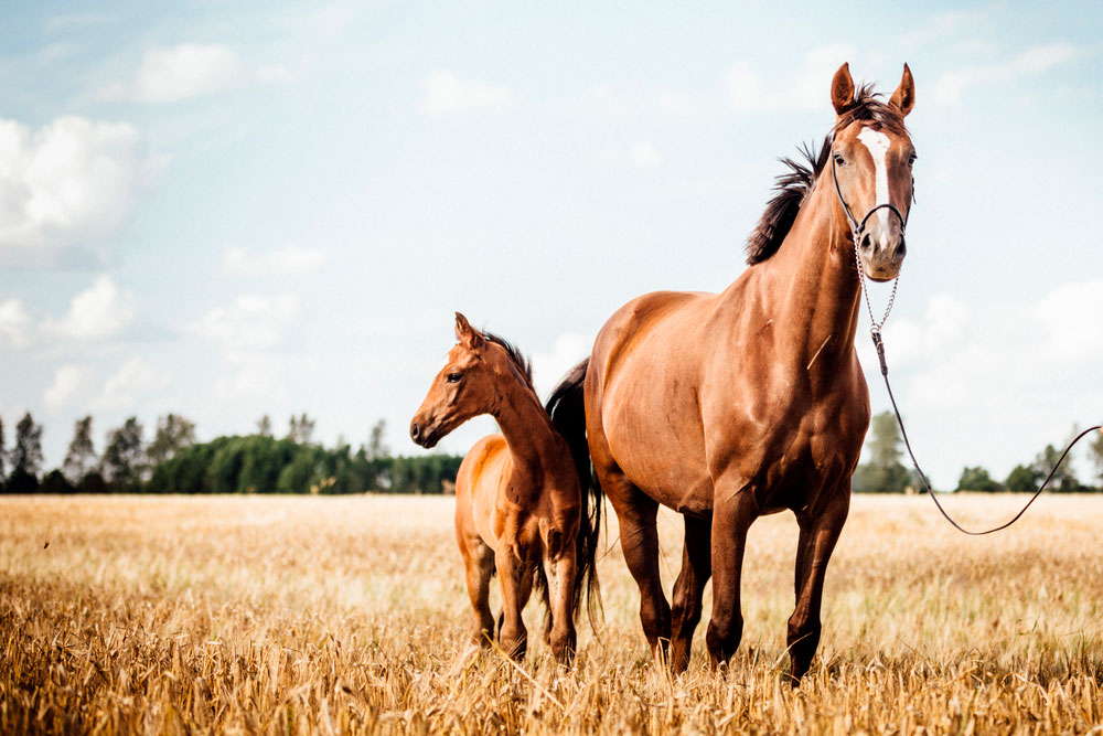 horse and foal standing outside
