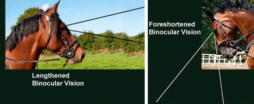 horse binocular vision