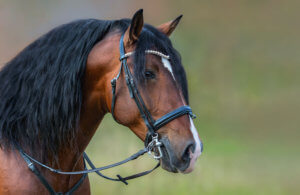 Horse Bridle Review by horsezz.com