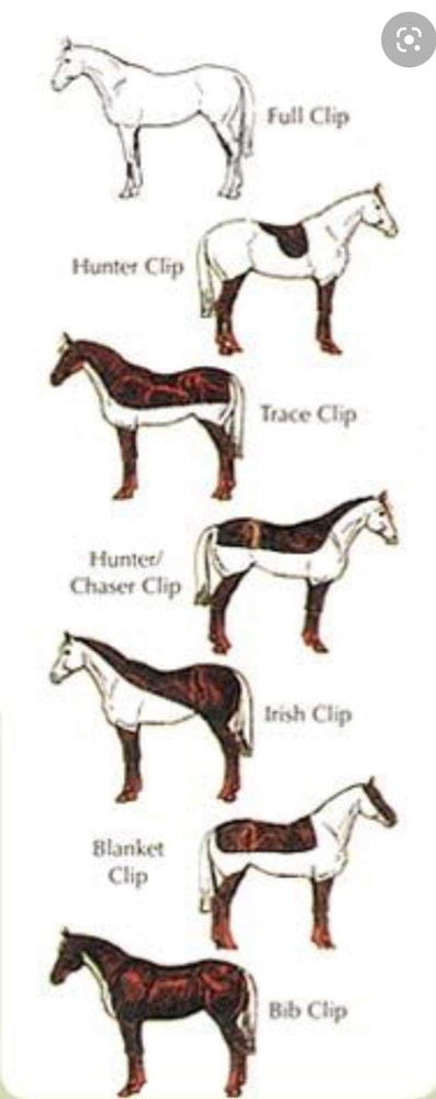 horse clips types
