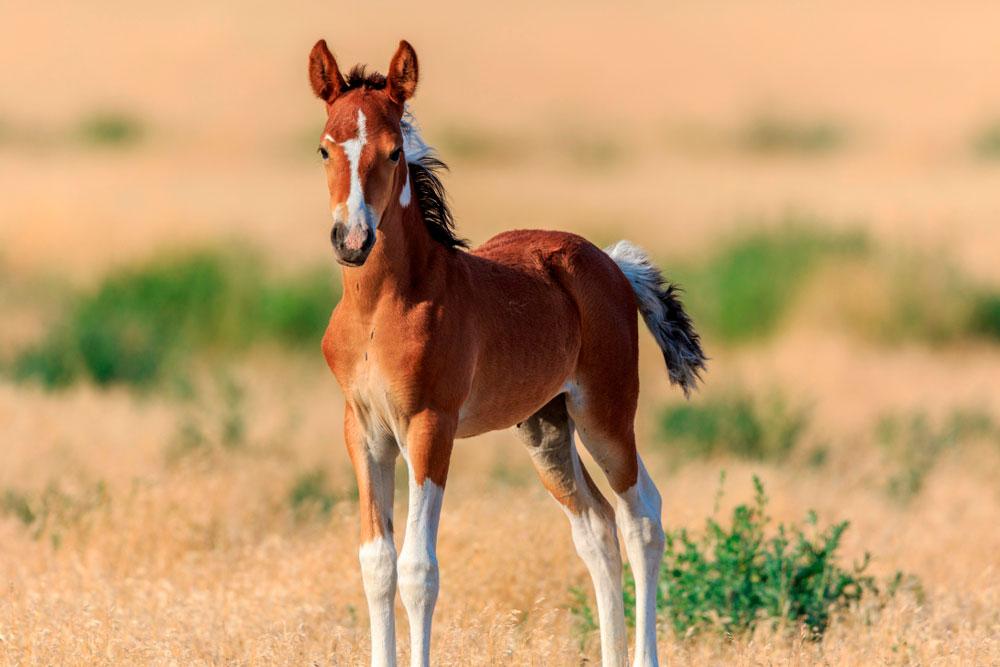 horse colt standing still