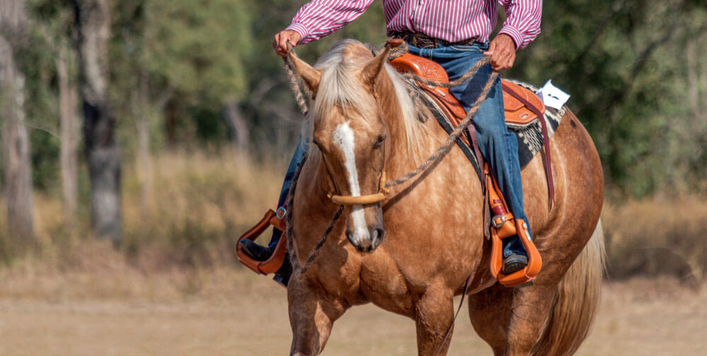 horse competition in western style