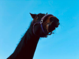 horse from funny angle