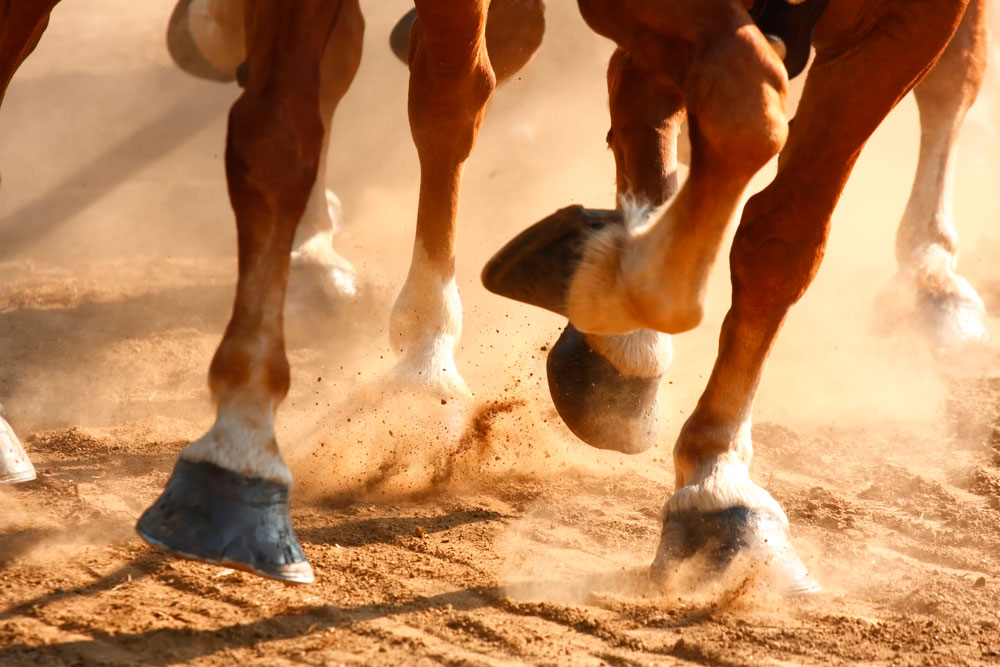 horse hooves running close view
