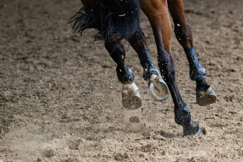 horse hooves with iron shoes
