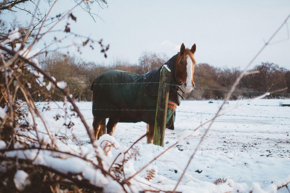horse in blanket in winter