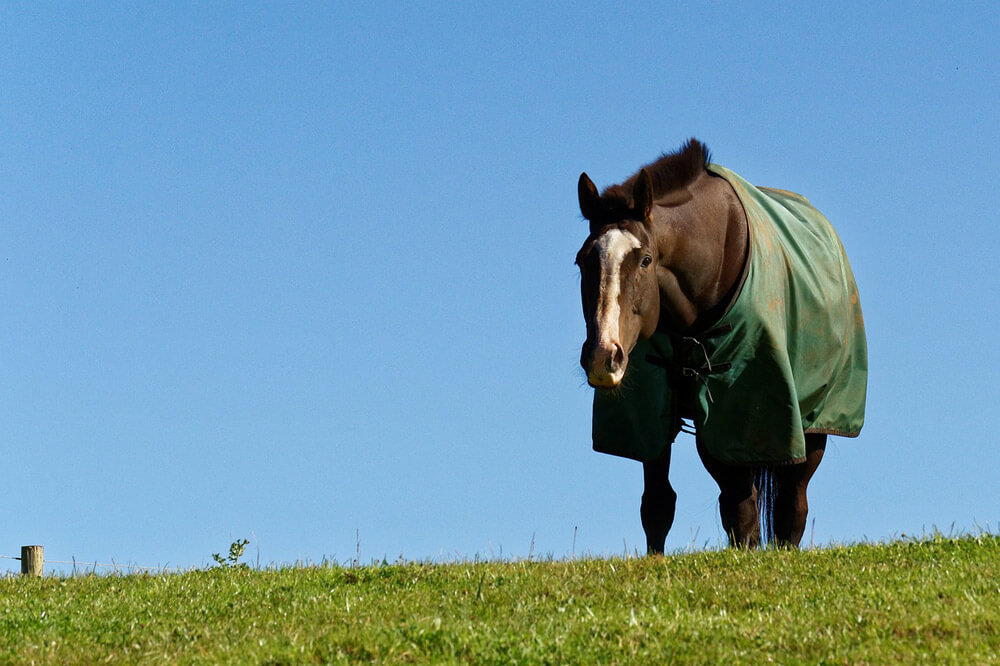 horse in green blanket grazing