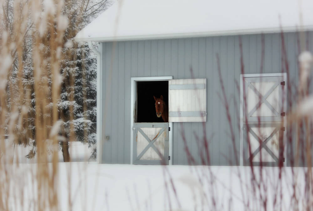 horse is hiding in stalls in winter