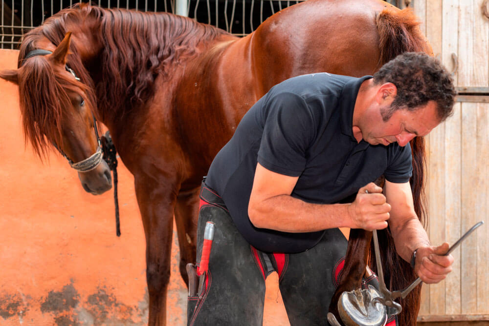 horse is looking at the farriers work