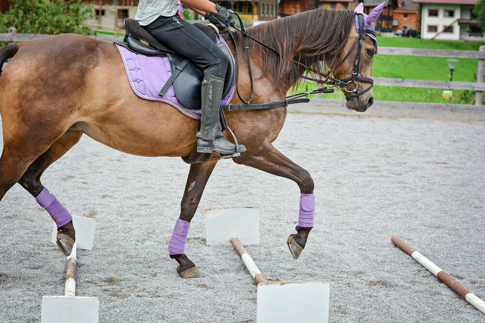 horse is performing in purple tack gear