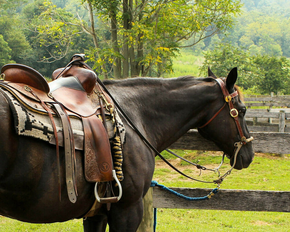 horse is tacked with a saddle and bridle
