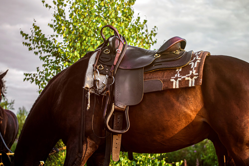 horse is tacked with saddle and pad