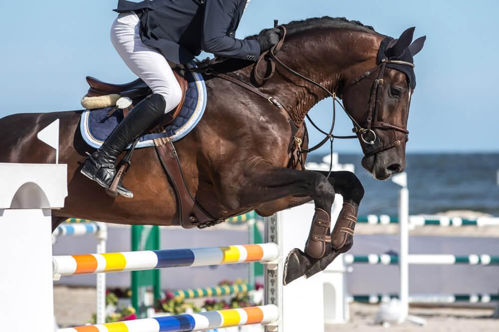 horse jumping english style