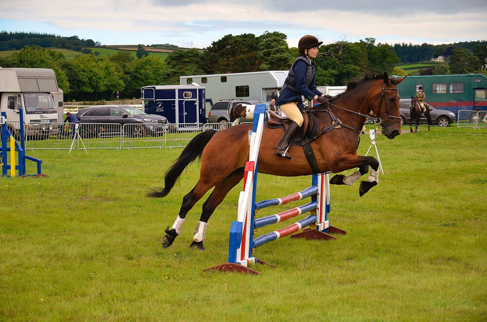horse jumping showing