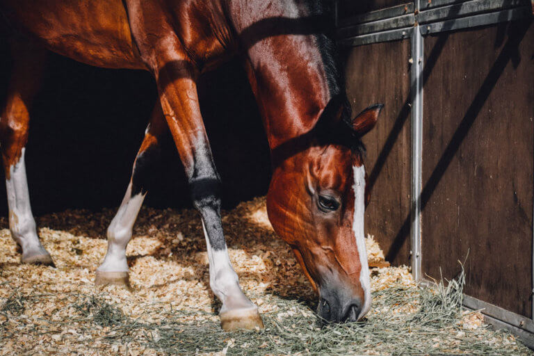 horse resting in barn