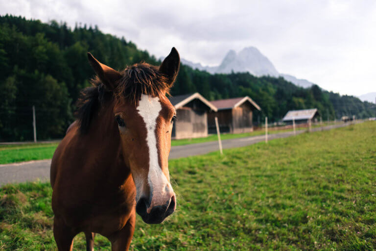 horse resting on pasture
