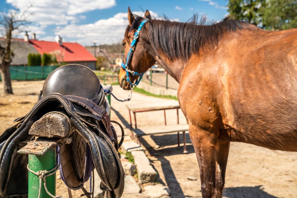 horse saddle on fence near horse