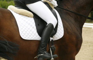 Horse Saddle Pads Review by horsezz.com