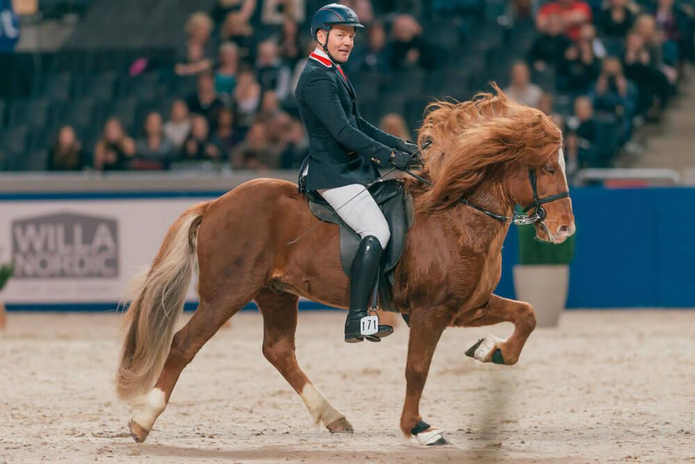 horse show gaited horse