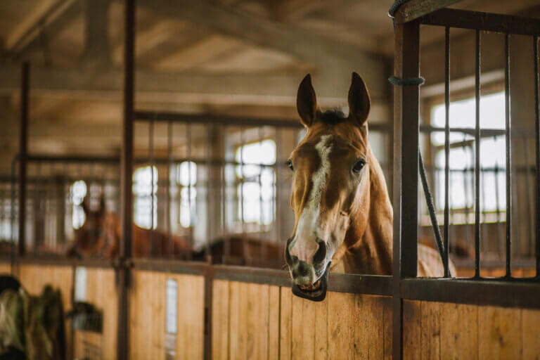 horse stalls close up