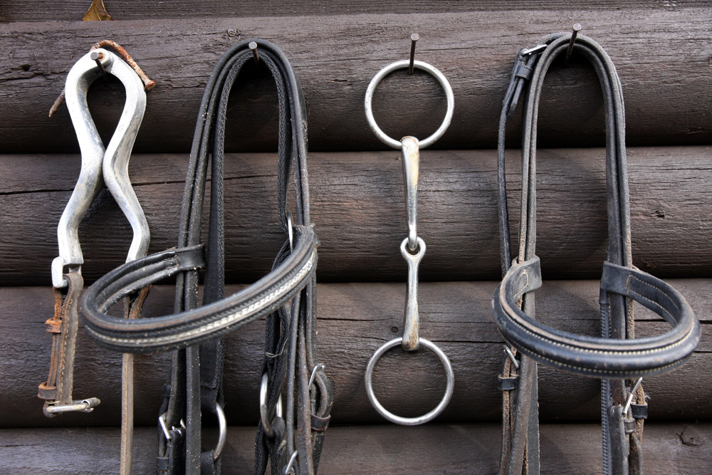 horse tack gear is hung on the wood