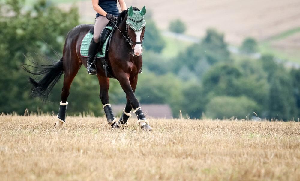 horse wearing turquoise tack