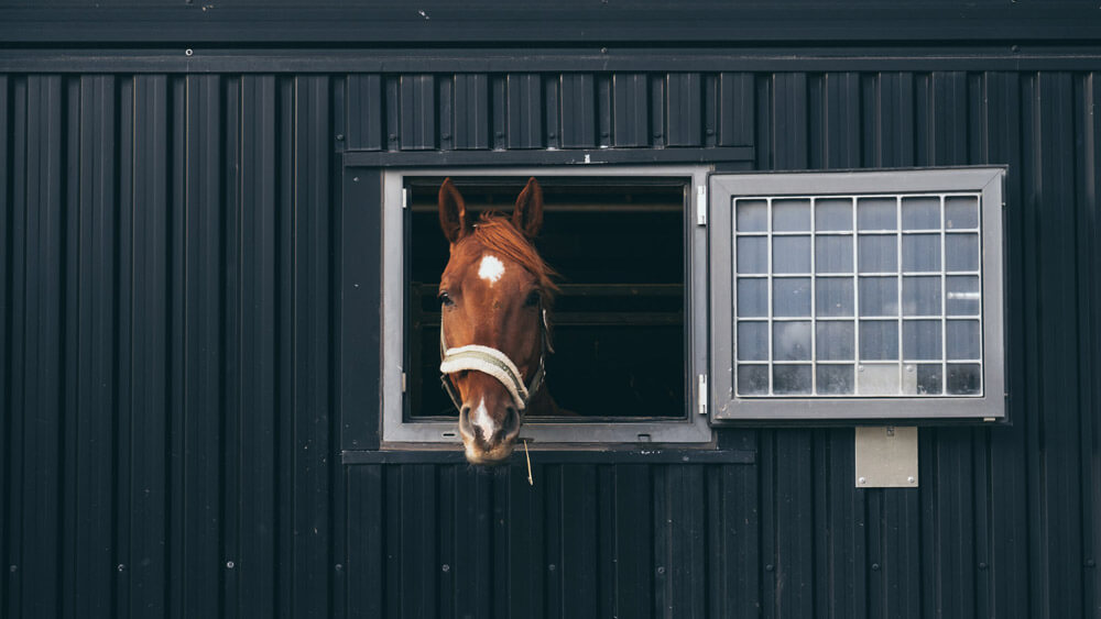 horse with bridle is looking through the window