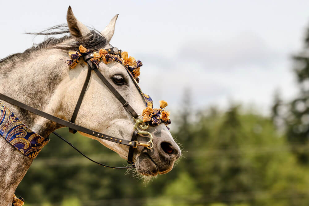 horse with decorated headstall