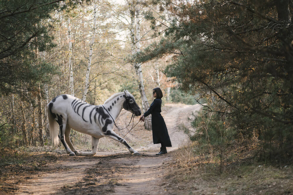 horse with skeleton paint is putting knee down