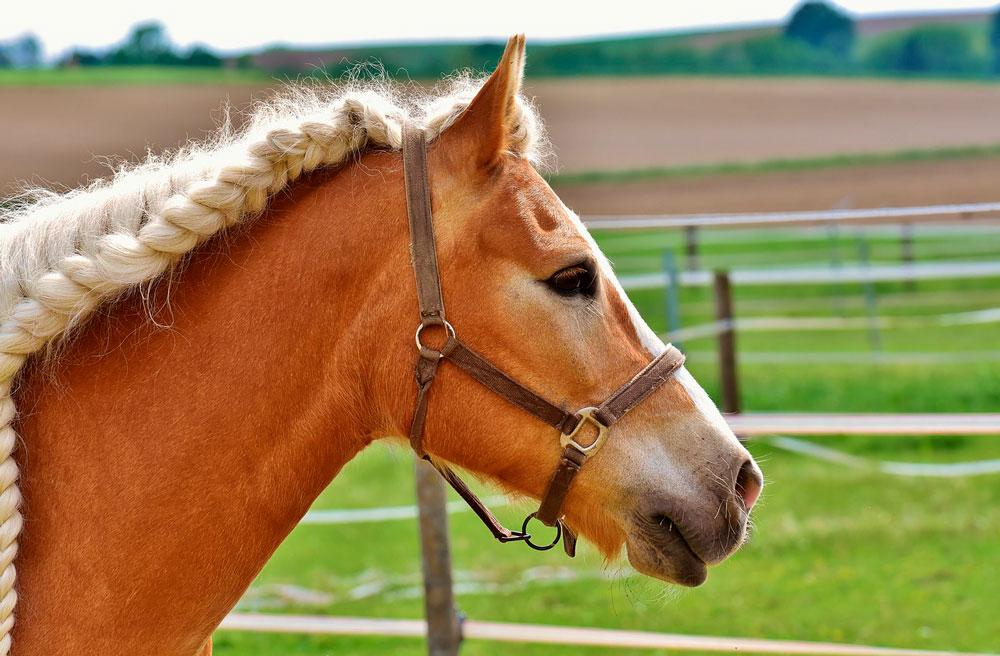 horse with white running braids