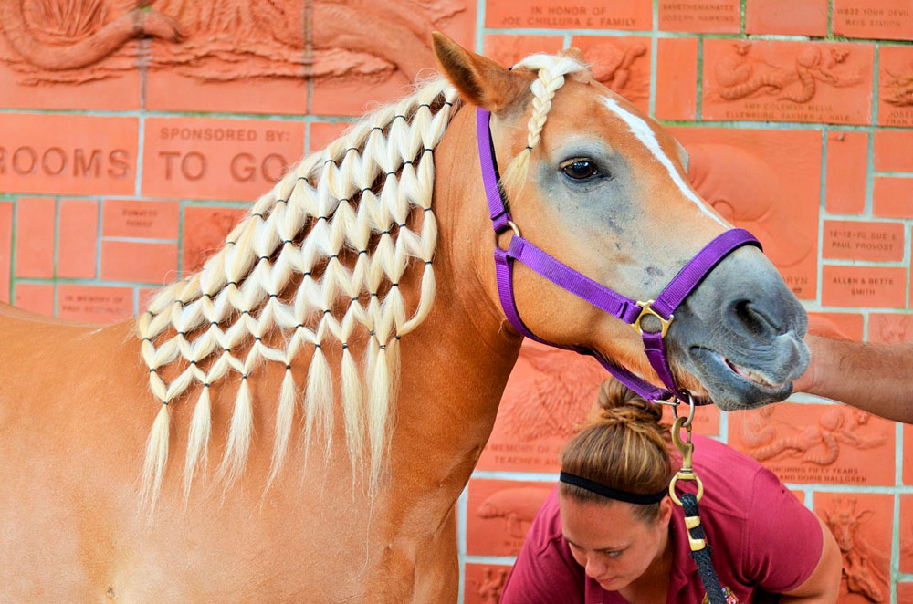 horse with continental braids