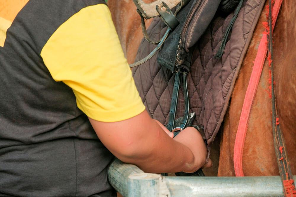 horse worker tighten the girth