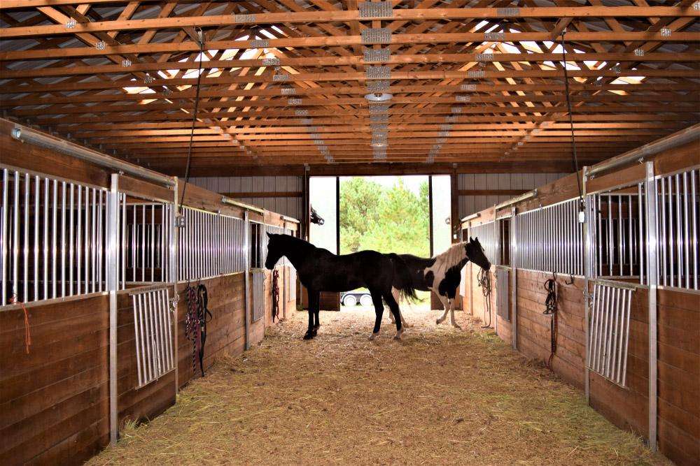 horses are resting inside the barn