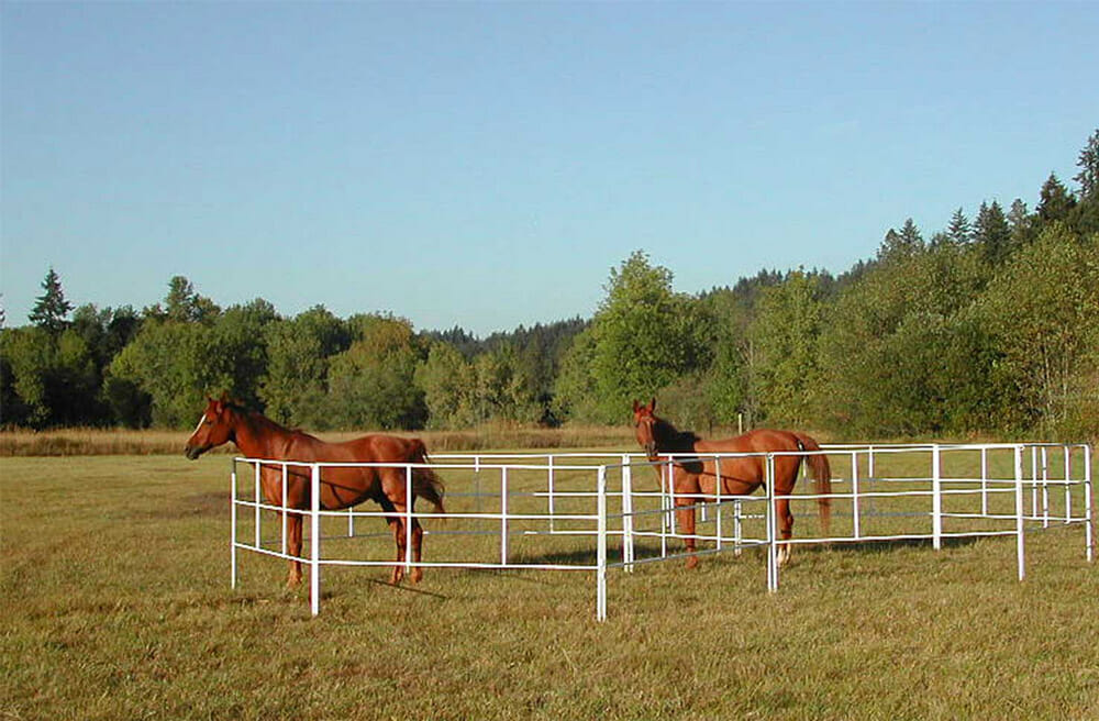horses are standing in a portable corral