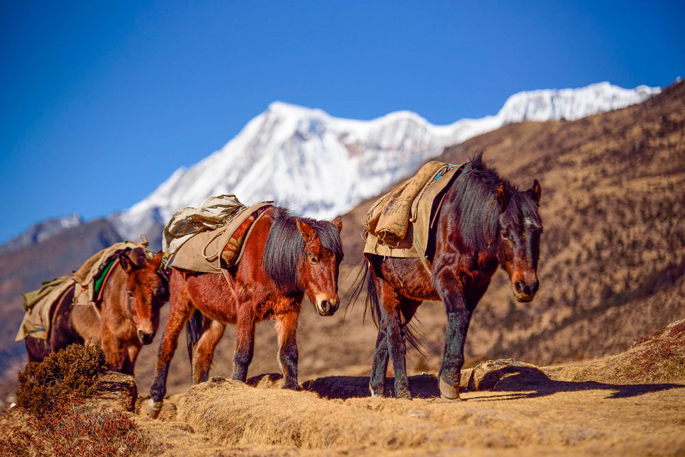 horses are traversing mountains