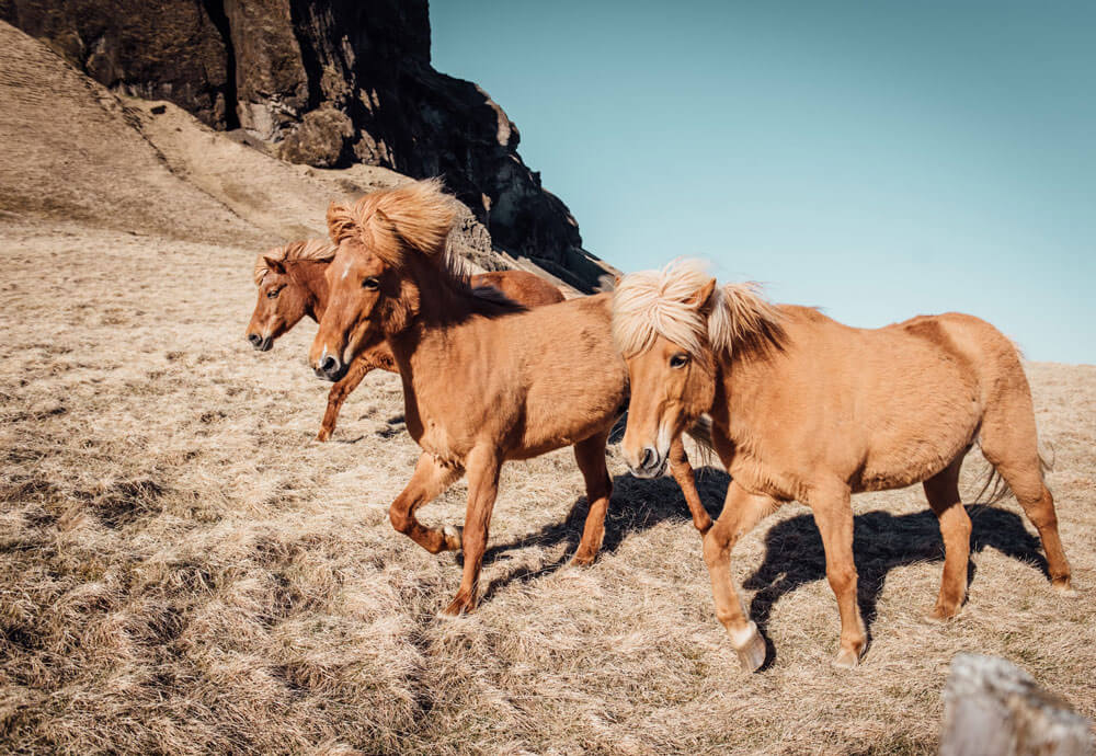 horses running in mountains