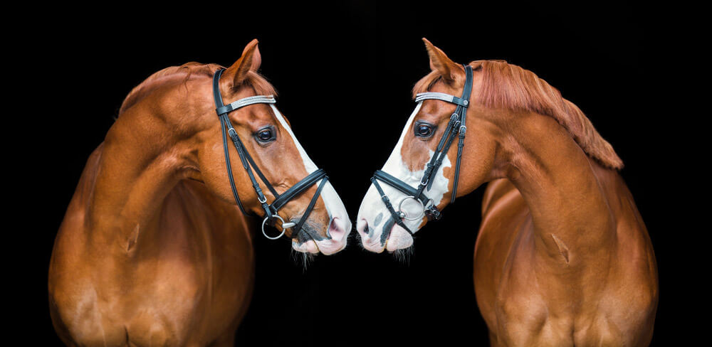 horses with white face markings