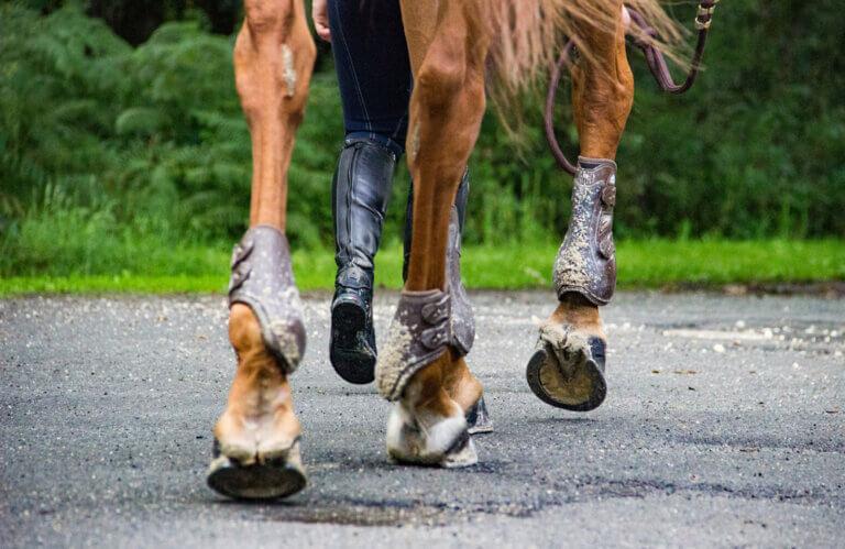 horseshoes close up