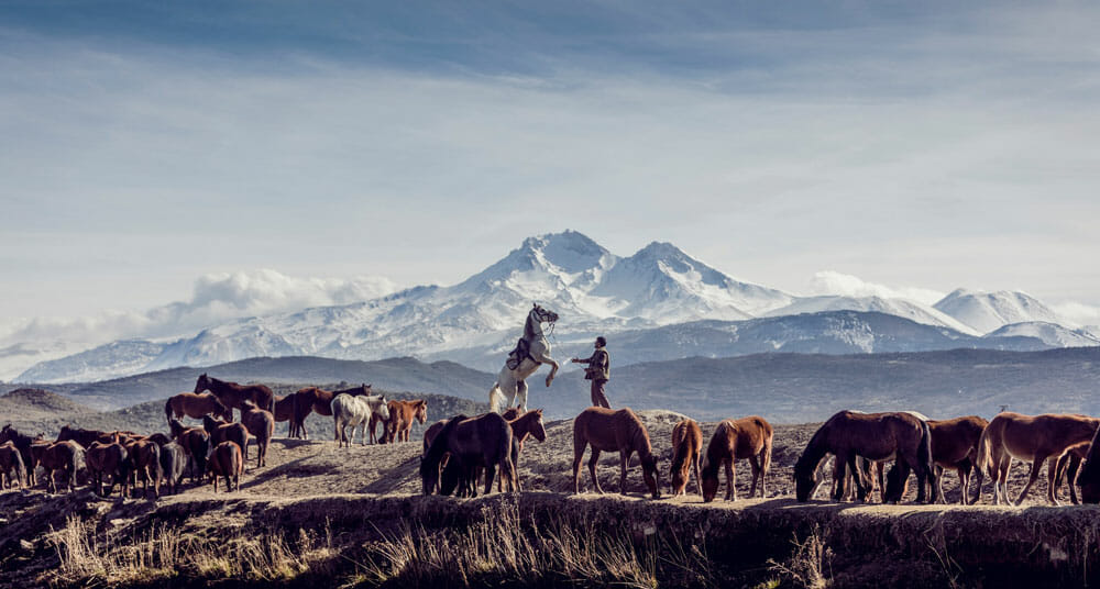 man is among horses in the mountains