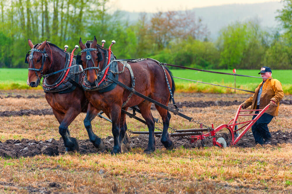 man is plowing the ground with draft horses