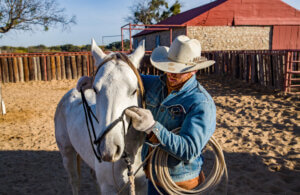man is putting halter on his horse