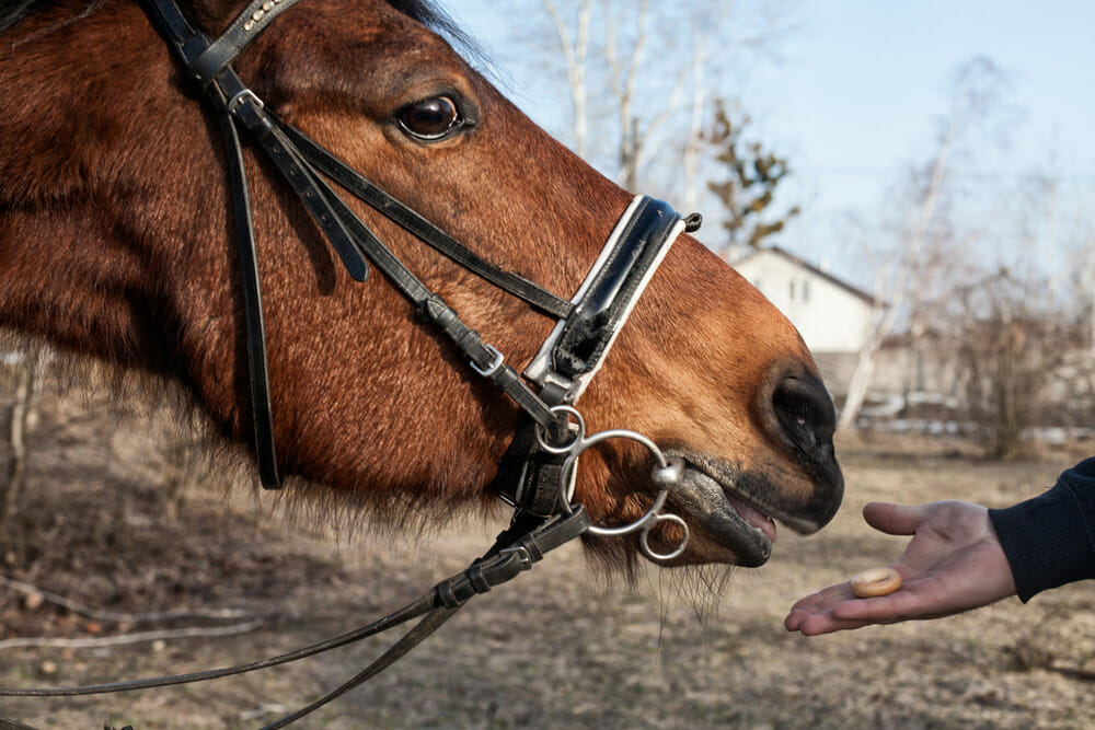 man is treating a horse