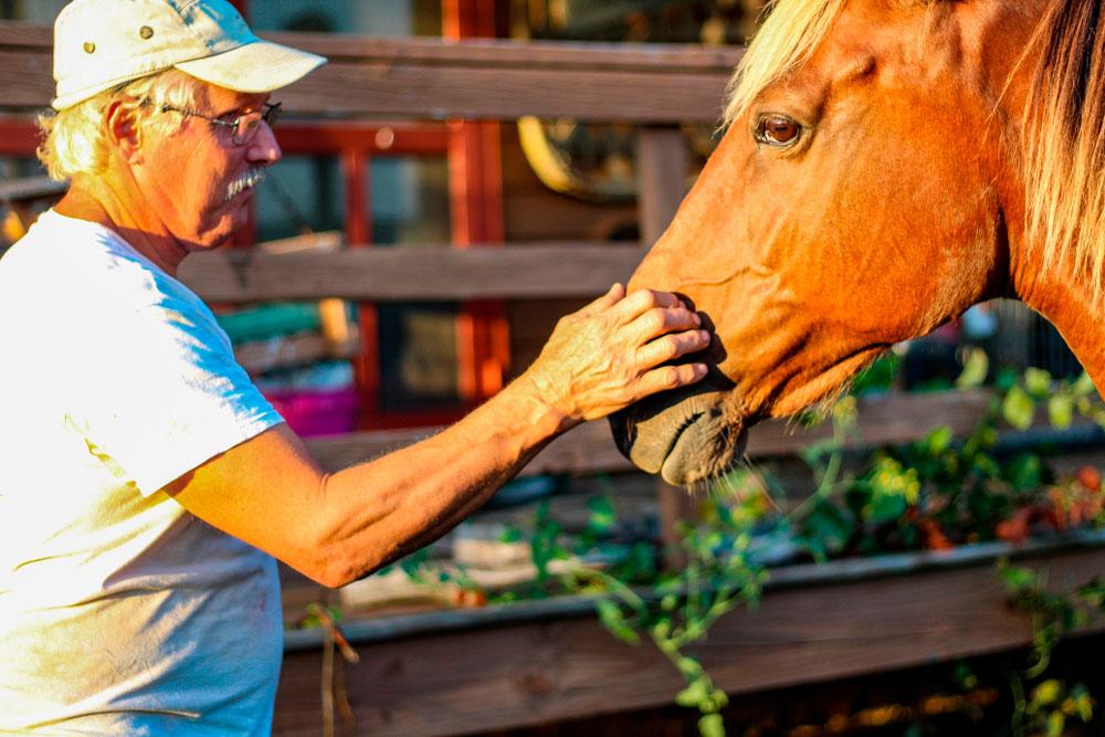 man petting his Rocky Mountain Horse