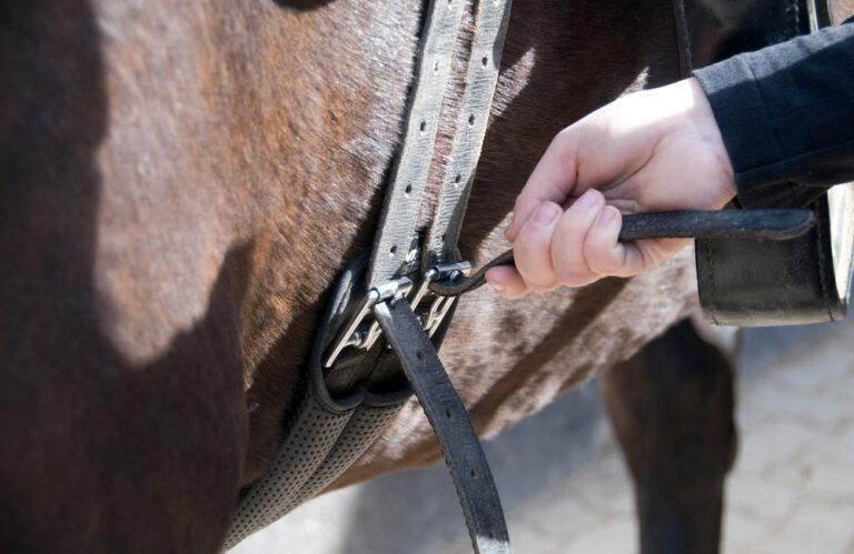 man tightening saddle billets