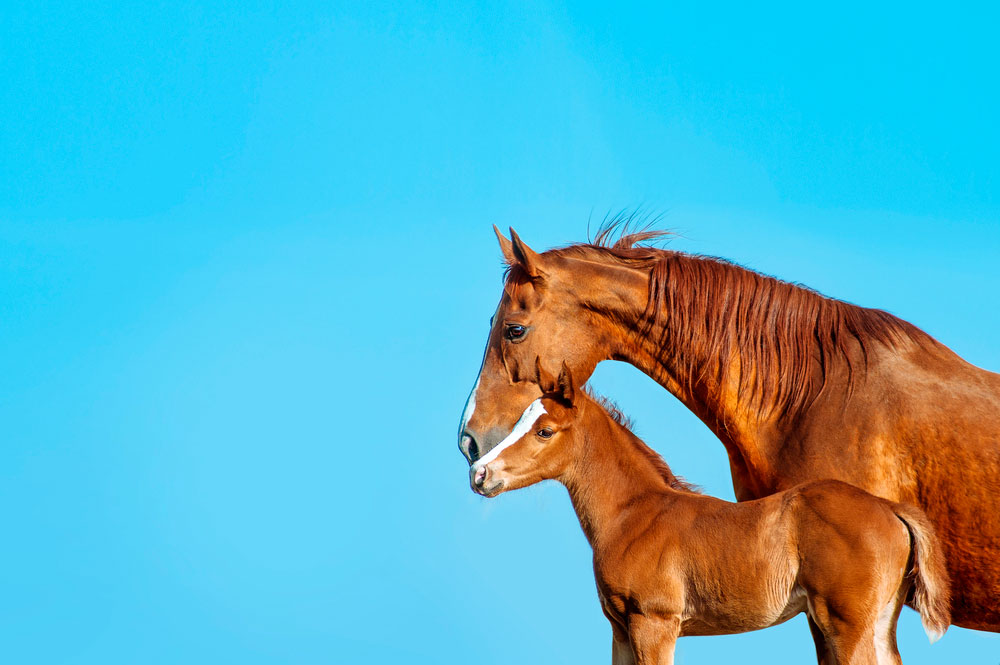 mare and her foal on sky background