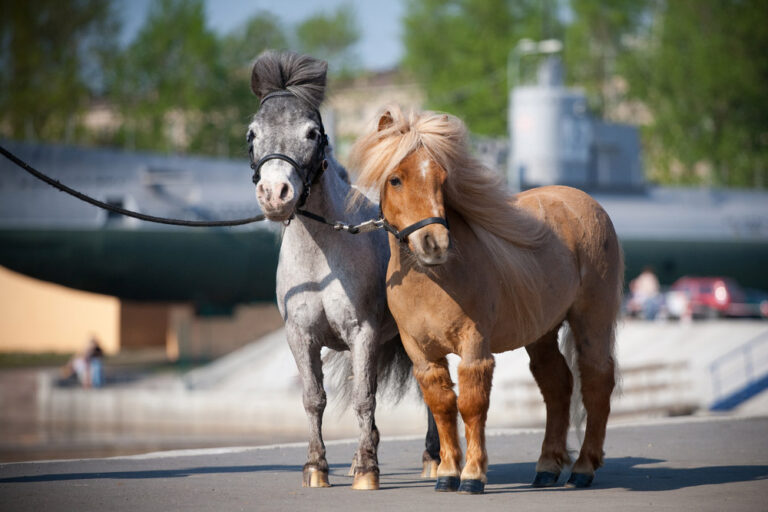 miniature horses are standing on the embankment