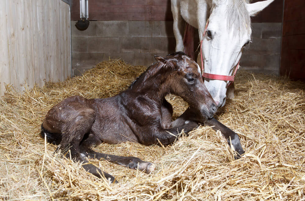 new baby foal arrived